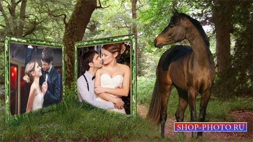 Рамка для фотомонтажа - Лошадка смотрит на ваше фото