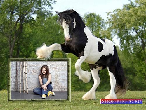 Рамка для фотошоп - Шикарная черно-белая лошадь и ваше фото
