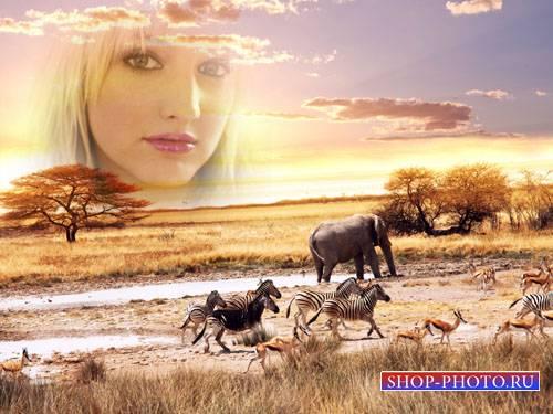 Фоторамка psd - Красивая Саванна
