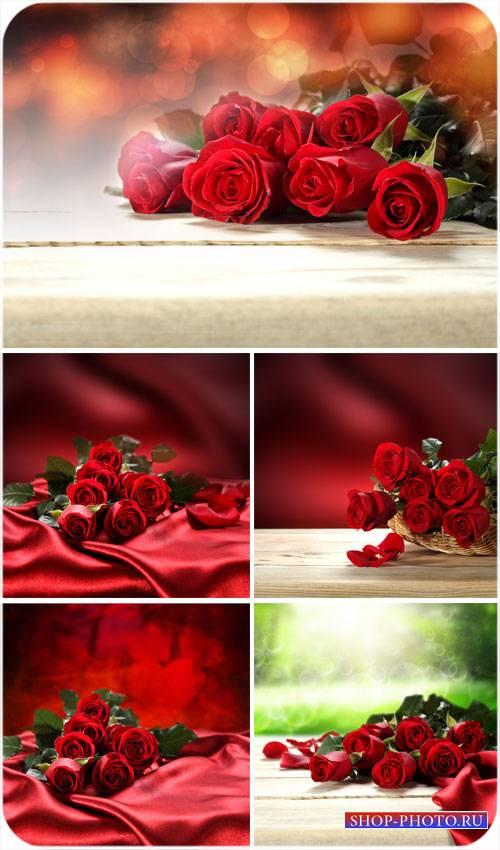 Красные розы, корзина с розами - сток фото