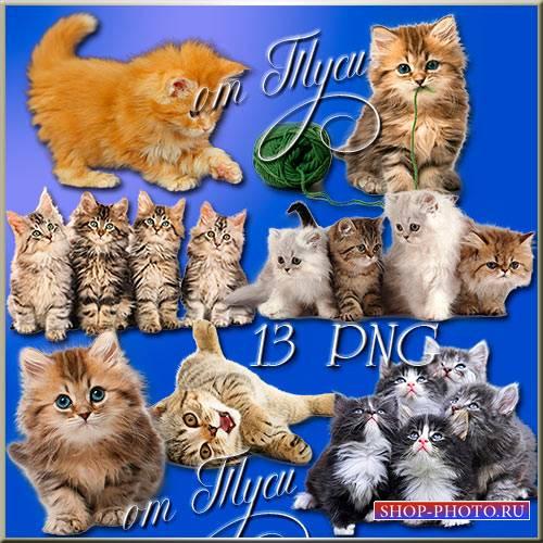 Клипарт - Пушистые котята