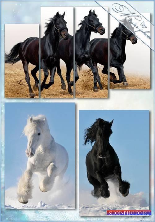 Полиптихи psd исходник - Прекрасные лошади