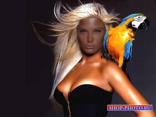 Шаблон psd женский - Фотосессия с большим попугаем