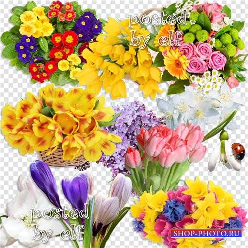Клипарт без фона - Полны весенние цветы какой-то дивной красоты