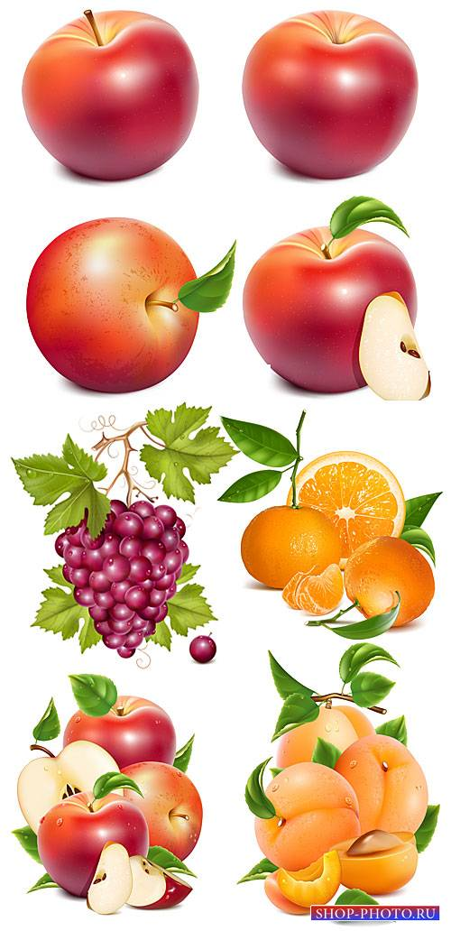 Яблоки, виноград, апельсин и абрикос в векторе