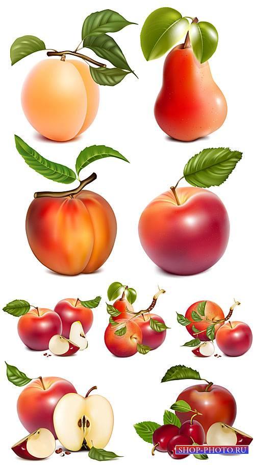 Яблоки, груши, персики, абрикос в векторе