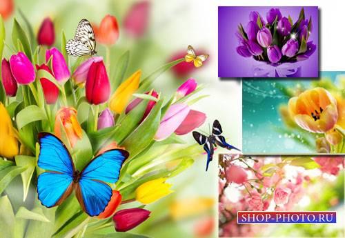 Растровый клипарт - Цветы весной