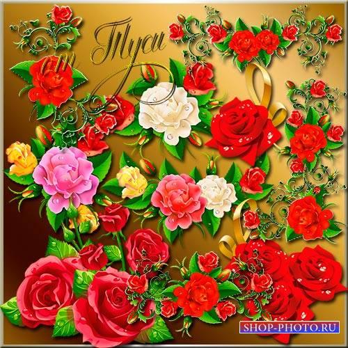 Клипарт - Аромат нежных роз