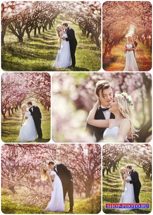 Жених и невеста в цветущем саду - сток фото