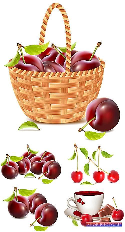 Черешня в векторе / Cherry vector
