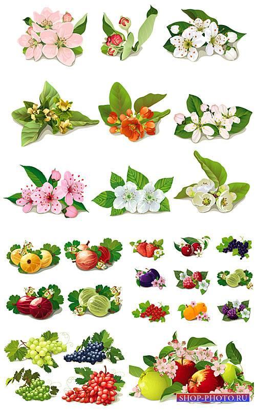Весенние цветы, фрукты и ягоды в векторе / Spring flowers, fruits and berri ...