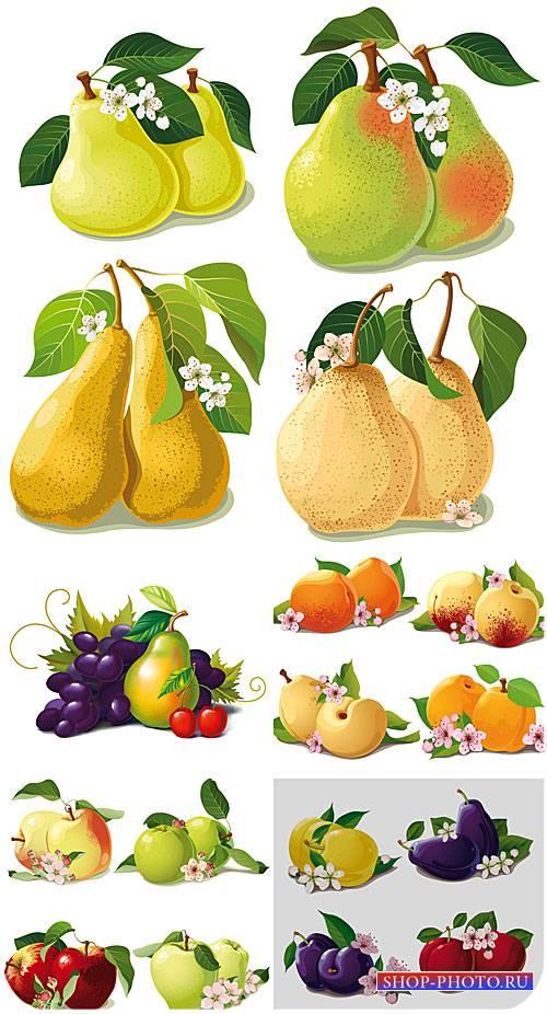 Фрукты в векторе, груши, яблоки / Vector fruit, pears, apples