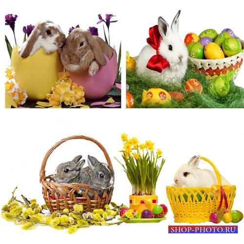 Клипарт – Пасхальные кролики