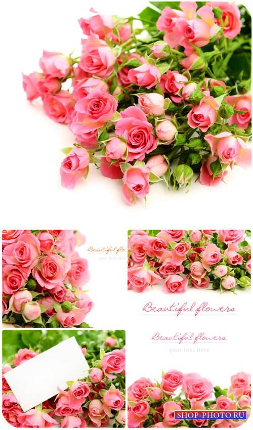 Розы, букеты розовых роз / Roses, bouquet of pink roses - Stock Photo