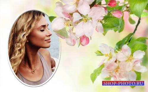 Фоторамка psd - Теплые весенние цветы