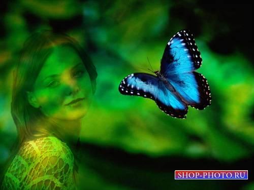 Рамка для фотомонтажа - Бабочка в полете