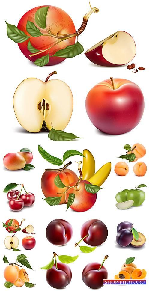 Фрукты и ягоды в векторе, груша, слива, яблоко / Fruits and berries vector, ...