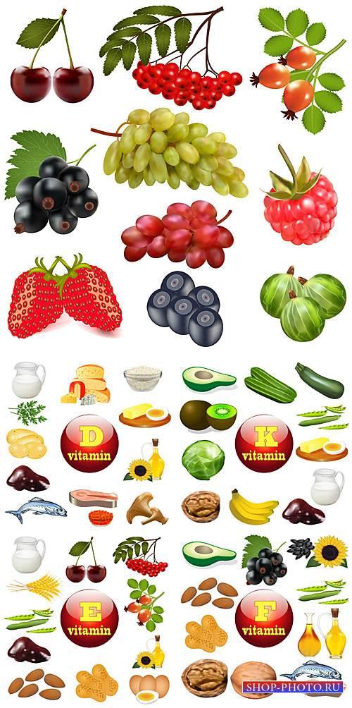 Продукты питания в векторе, фрукты, овощи / Food vector, fruits, vegetables