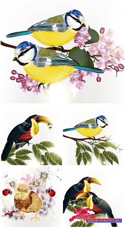 Птицы в векторе, природа / Vector birds, nature