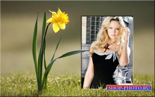 Цветущий нарцисс - Рамка для фотошопа