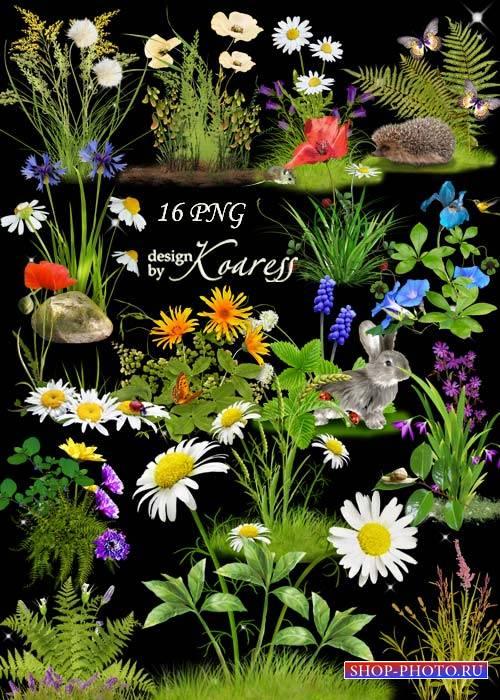 Набор цветочных кластеров для фотошопа с полевыми и лесными цветами - Цвето ...