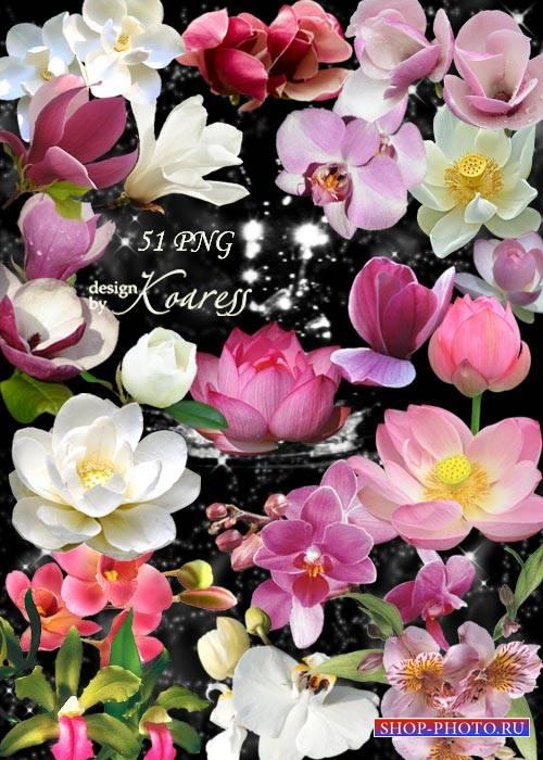 Png клипарт для фотошопа с лотосами, водяными лилиями, орхидеями - Экзотиче ...