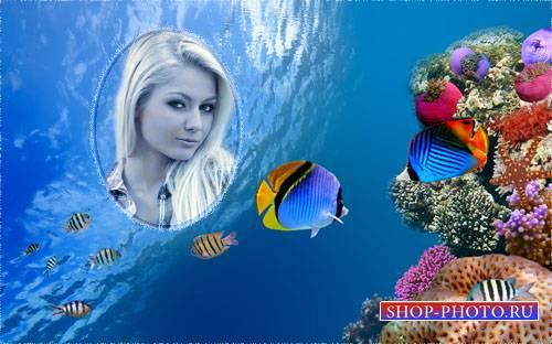 Рамка psd - Яркие рыбки