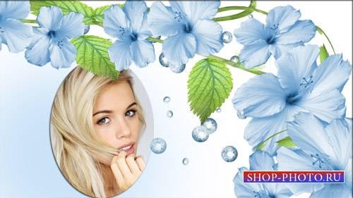 Рамка для фотошоп - Нежные цветы