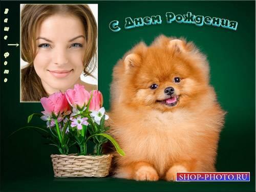 Фоторамка - Маленькая собачка с тюльпанами