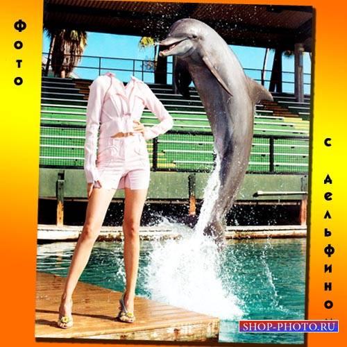 С красивым дельфином - Шаблон psd