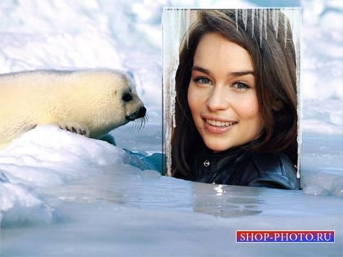 Рамка для фотомонтажа - Маленький северный морской котик