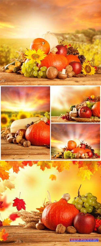 Осенние фоны, осенний урожай / Autumn background, fall harvest - Stock phot ...