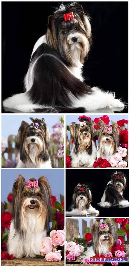 Породистые щенки и цветы / Purebred puppies and flowers - Stock Photo