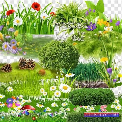 Клипарт - Зелёная трава, газоны, кустарники на прозрачном фоне