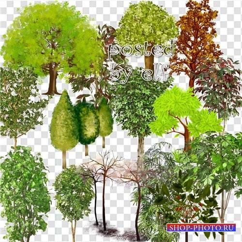 Клипарт - Разные деревья на прозрачном фоне
