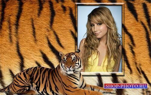Рамка для фото - Красивый тигр