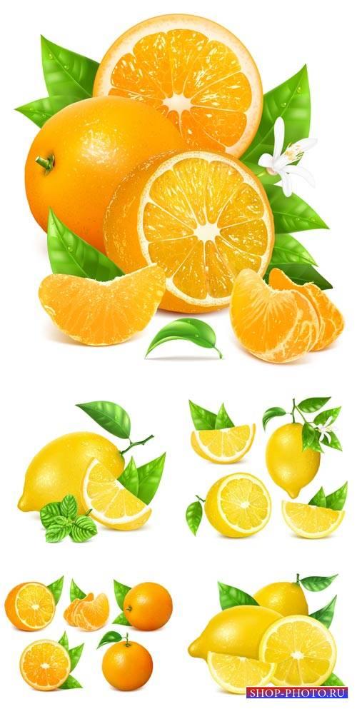 Лимон, апельсин в векторе / Lemon, orange vector