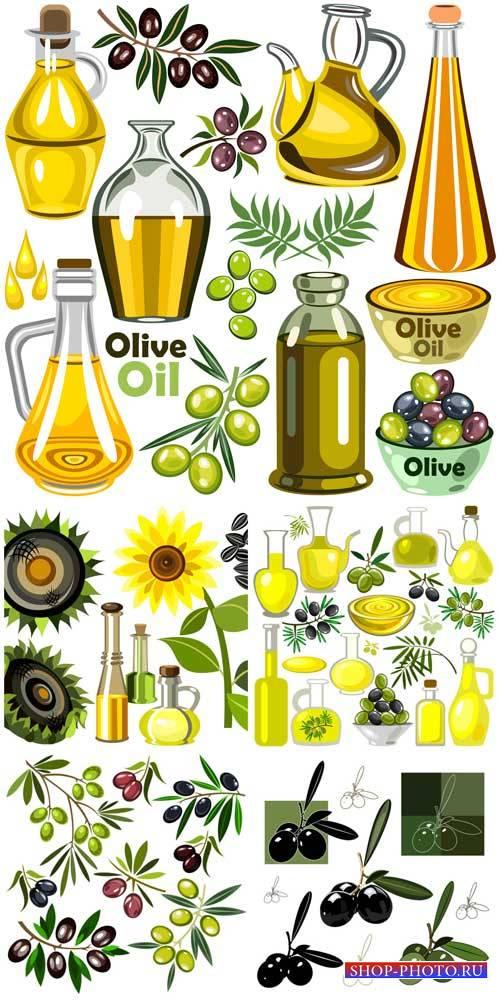 Оливки, оливковое масло в векторе / Olives, olive oil vector