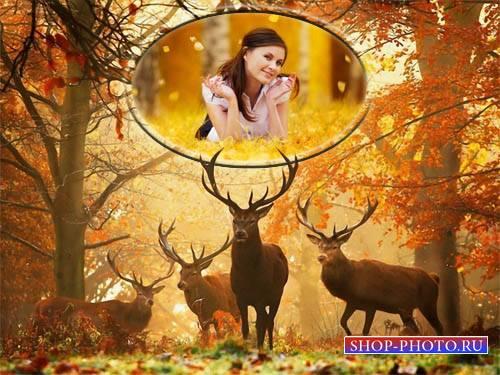 Фоторамка psd - Животные в лесу