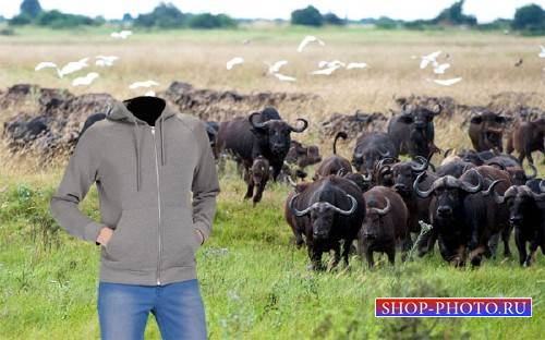 Шаблон psd - Стадо бизонов