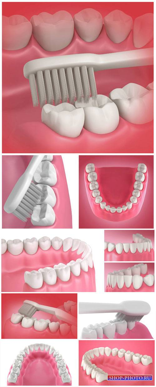 Teeth and toothbrush, dentistry - stock photos