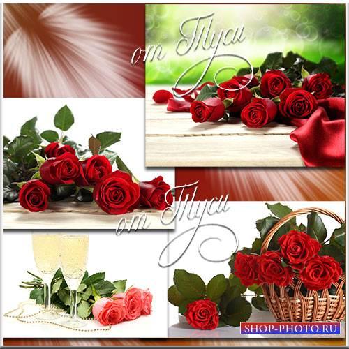 Нежнейшей розы лепесток атласный