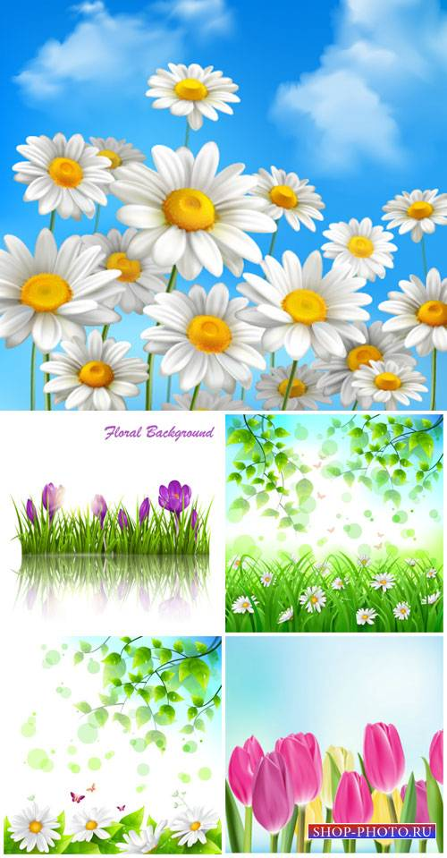 Flowers vector, daisies, crocuses, tulips