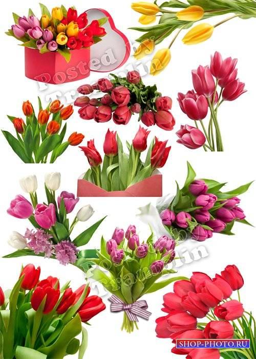 Тюльпаны на 8 марта – Весенний клипарт на прозрачном фоне