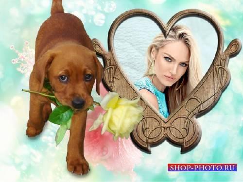 Рамка для фотошоп - Милый щенок дарит розу
