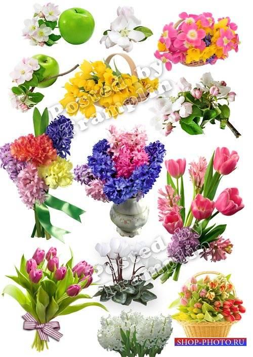 Весенние цветы - Клипарт на прозрачном фоне
