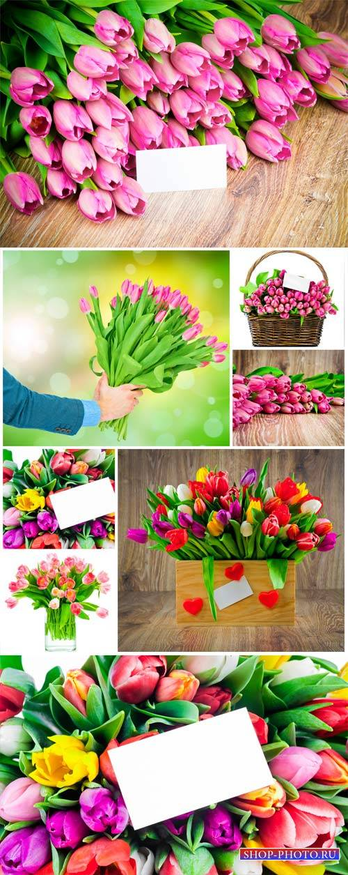 Tulips, beautiful spring flowers