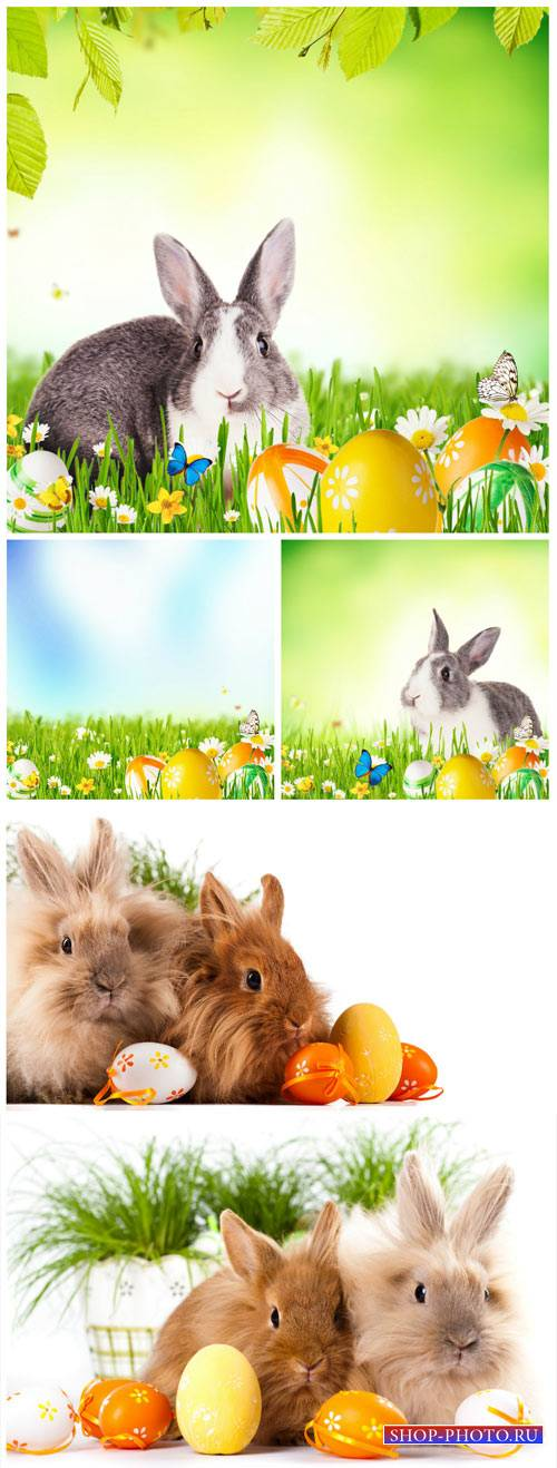 Easter bunnies, flowers and butterflies - stock photos