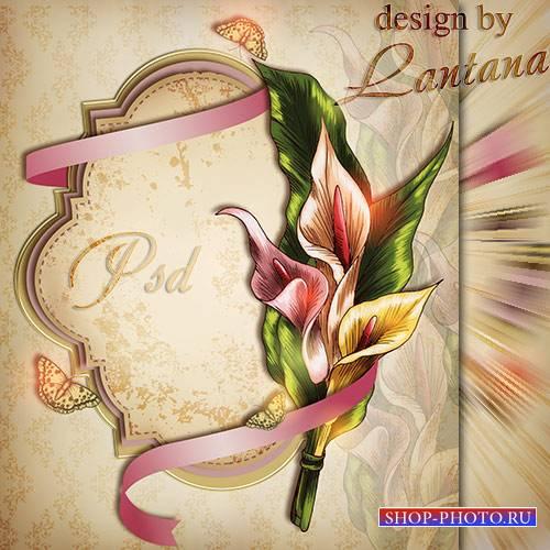 PSD исходник - Поздравительная открытка с каллами