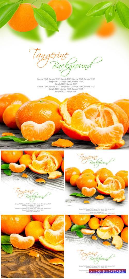 Tangerines - stock photos